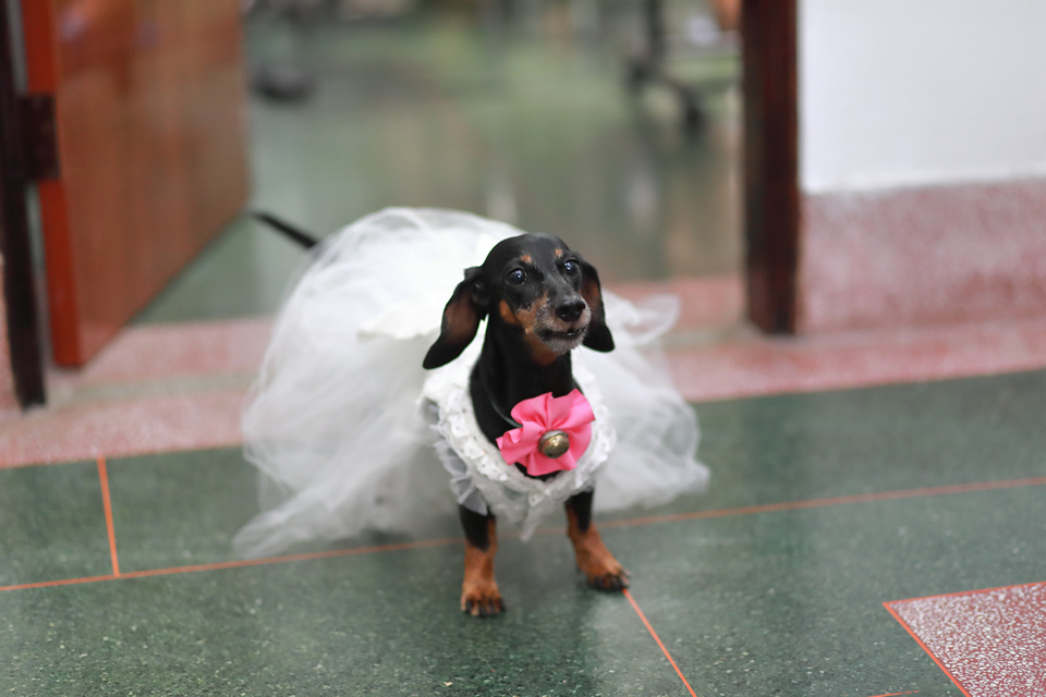 台北婚攝小游@新竹家欣樓 瑜與婷婚禮紀錄 饅頭爸團隊0928_Blog_001.jpg